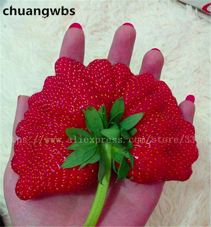 500pcs / bag Strawberry seeds Sweet fruit seeds Rare fan-like potted plants edible fruit seeds in Bonsai for home garden