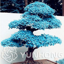 Buy Bonsai Acer And Get Free Shipping On Aliexpresscom