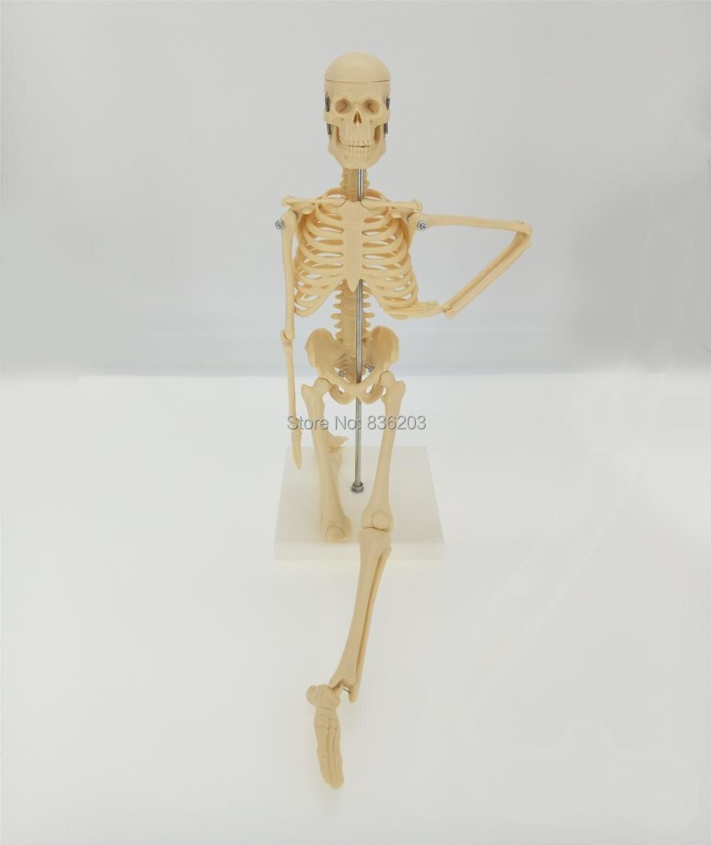 1/4 Life Size human anatomy Full Body 45cm esqueleto skeleton ...