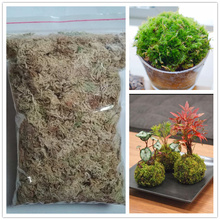 10G Sphagnum Moss Garden Supplies Moisturizing Nutrition Organic Fertilizer For Phalaenopsis Orchid Musgo