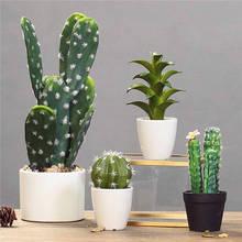 Promotion! 1000pcs rare cactus plant Japan best selling succulent flower bonsai plant indoor plant home and garden decoration