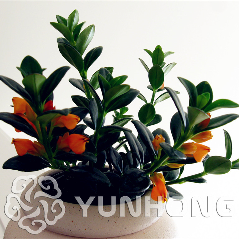 Big Promotion!50pcs Goldfish Chlorophytum Bonsai Absorb Formaldehyde Perennial Potted Plants Indoor Plants Air Purification