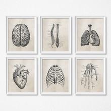 Научная Анатомия человека винтажные плакаты художественные принты, медицинская Анатомия холст живопись медицинский доктор клиника настенные картины декор