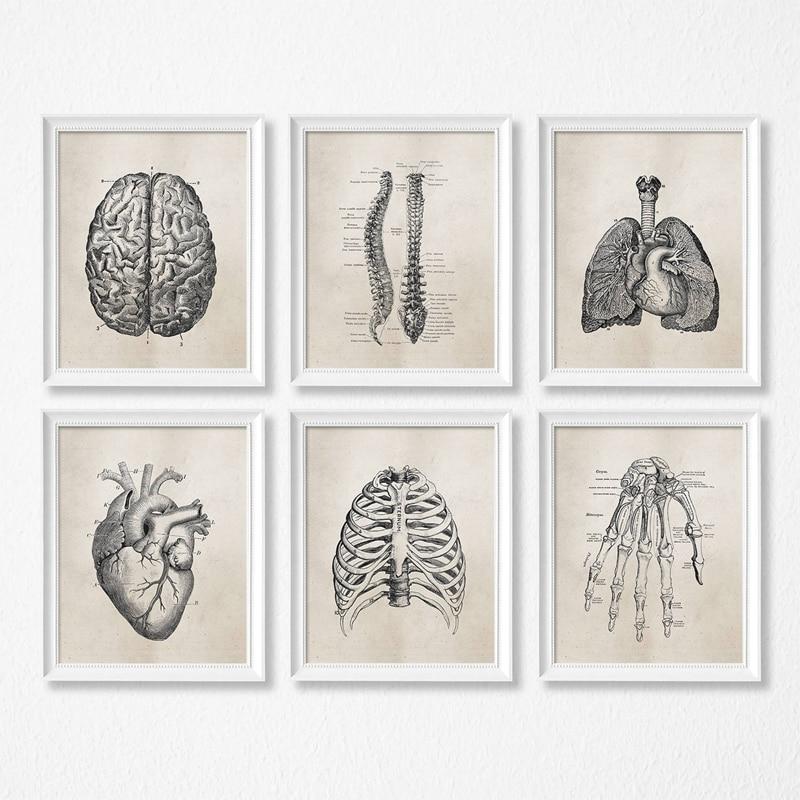Анатомия человека наука старинные плакаты художественные принты, медицинская Анатомия Холст Картина медицинский доктор клиника настенные...