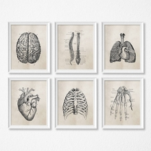 Pósteres clásicos de Ciencia de Anatomía Humana, impresiones de arte, pintura de lienzo de anatomía médica, fotos decorativas para pared de Clínica Médica