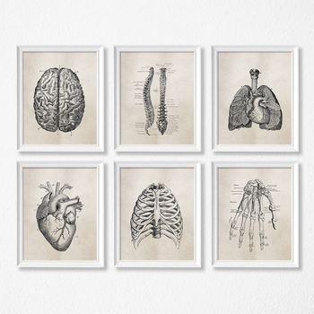 Human Anatomy Science Vintage Posters Art Prints , Medical Anatomy Canvas Painting Medical Doctor Clinic Wall Pictures Decor
