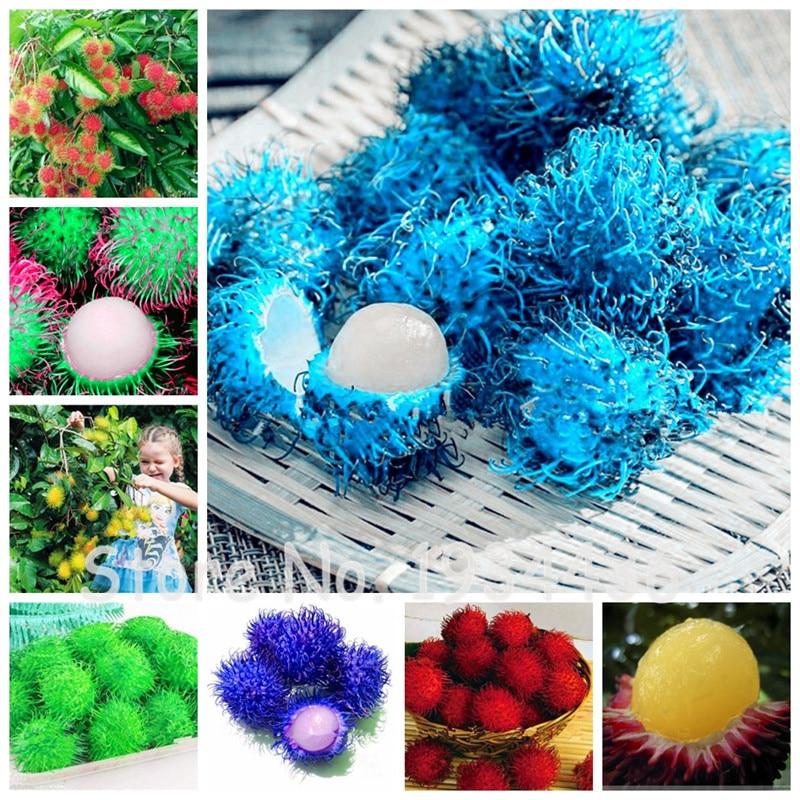 Home Garden Malaysia