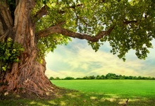 Laeacco Spring Old Tree Green Grass Filed Natural Scenic Photography Backgrounds Photographic Backdrops For Photo Studio