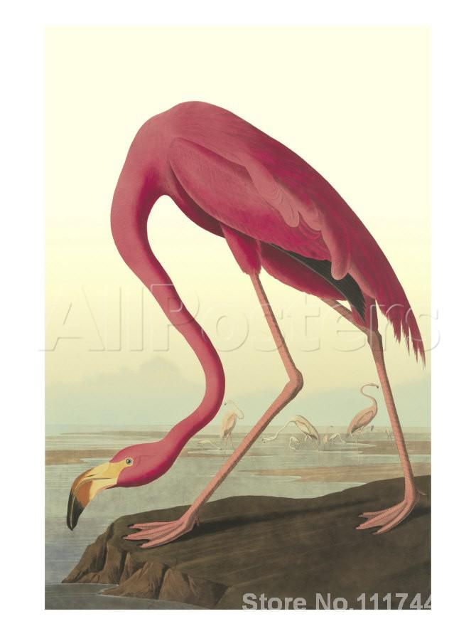 ᗑ Hayvan Boyama Ku Amerikan Flamingo John James Audubon Sanat