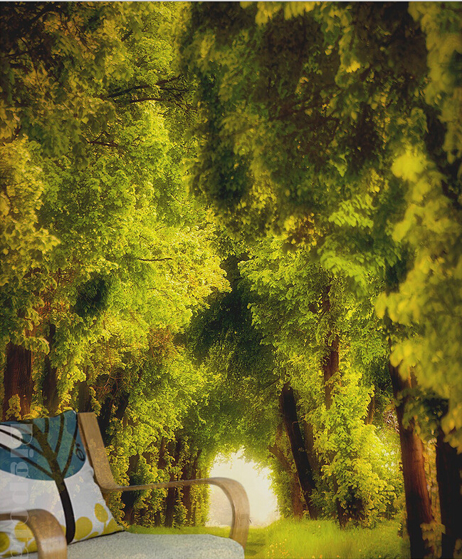 ... bos grasland landschap fotografie, woonkamer tv muur slaapkamer behang
