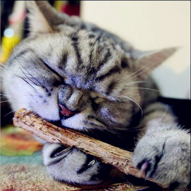 Tooth Care Sticks for Cats
