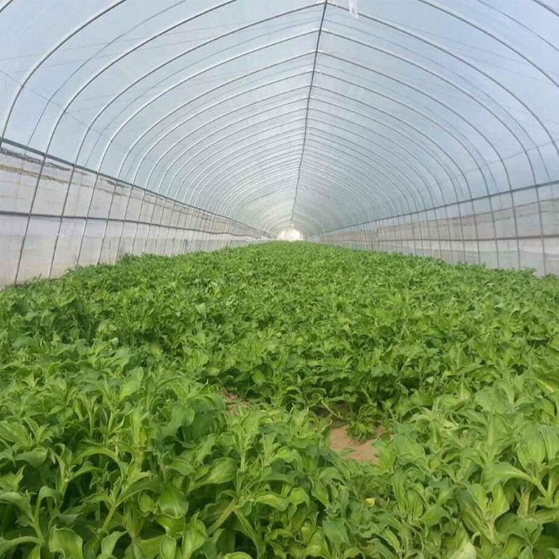 5m 100Mesh Pest Control Net Vegetable Fruit Plants Care Cover Greenhouse  Protection Mosquito Aphids Pest Reject Netting In Plant Covers From Home U0026  Garden ...