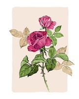 Hot Selling Frameless Picture Home Decor Flower Painting By Numbers Handwork Draw On Canvas Wall Art
