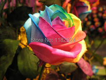 100pcs China Rare Rainbow Rose Seeds La Rosa Semillas Gift Easy to Plant Garden Planting