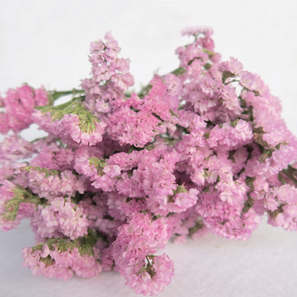 Pink Color Dried Natural Flower Bouquets Natural Dried Myosotis