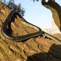 52 ''de Halloween Fake Realista Juguetes Serpiente Serpientes de Goma Suave Animal Party Decor Novedad Broma Juguetes Tricky Prop de Halloween