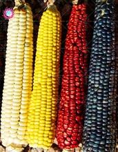Semi di mais frutta colore 40pcs 4 semi di frutta e verdura biologici non OGM per giardino di casa e fattoria tasso di germinazione è alta facile crescere