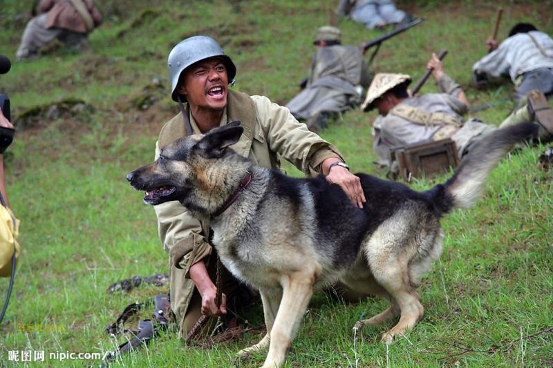 large dog leash (3)