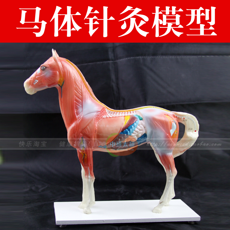 Horse model horse anatomy acupuncture point model animal model Horse Anatomy Model 22cm head acupuncture point model head acupuncture four function model acupuncture model