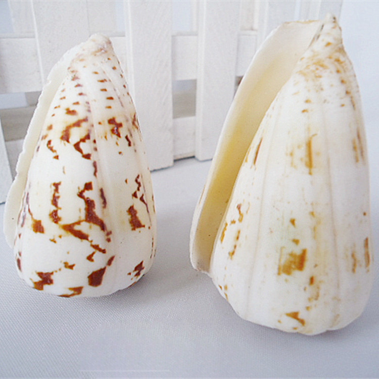 Natural Ocean Sea Shell Wedding Home Decoration Beach Conch SeaShells Aquarium Fish Tank Ornaments Sea Snail Natural Crafts