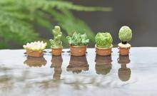 (A lot: 10 pieces)Creative cute cactus succulents mini fridge magnet