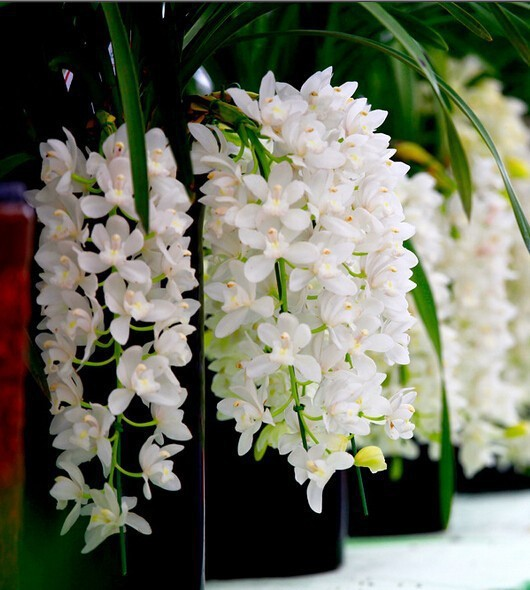 30 pcs white color chinese cymbidium orchid balcony seeds bonsai 30 pcs white color chinese cymbidium orchid balcony seeds bonsai garden flower seed orchid semente decorative flowers rare in bonsai from home garden on mightylinksfo