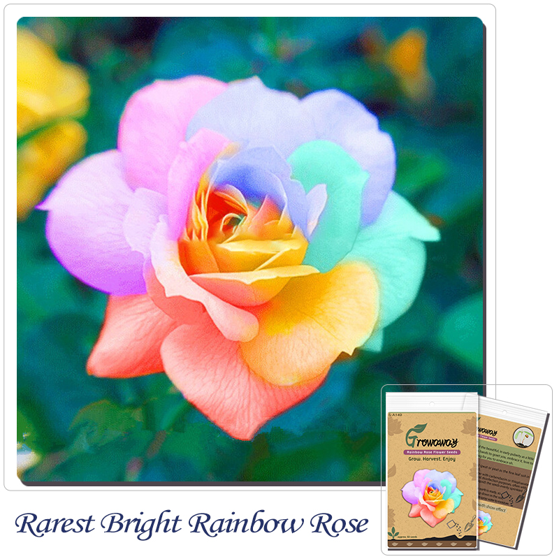 Flower seeds 50 pcs rarest bright rainbow rose flower for Growing rainbow roses from seeds