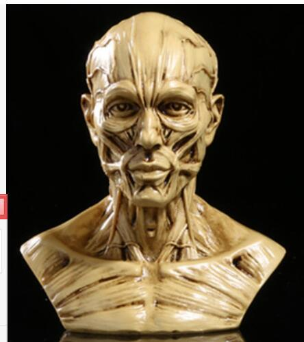 Rare Muscle skull man Medical bust body model high-grade resin statue home decoration wedding
