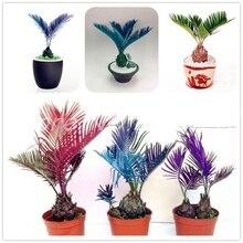 7ef1334945 Galeria de cycas bonsai por Atacado - Compre Lotes de cycas bonsai a ...