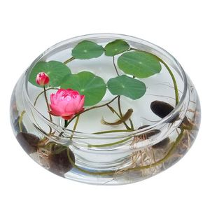 20 Seeds Bowl Lotus Flowers Bo