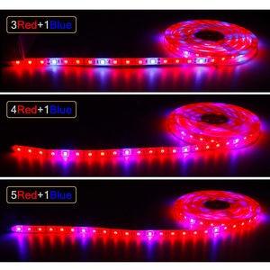 Image 2 - Pianta coltiva le luci 1m 2m 3m 4m 5m impermeabile spettro completo LED striscia fito lampada fiore rosso blu 4:1 per serra idroponica