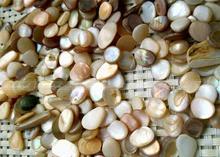 Природные Крошечные Снаряды, Ракушки Гравий Аквариума 5 мм-8 мм для Fish Tank Чаша Декор природных камней и минералы F822