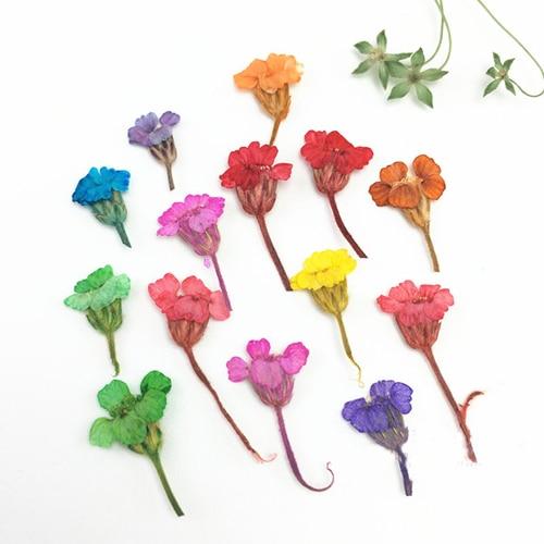 Тысячелистника Малый засушенные цветы Книги по искусству для закладки DIY сырье Материал Бесплатная доставка 200 шт.