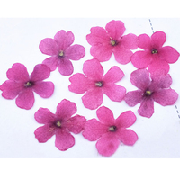 Pink Verbena Handmade Floral Pressed Flower For Spicemen Wholesale Free Shipment 100 Pcs