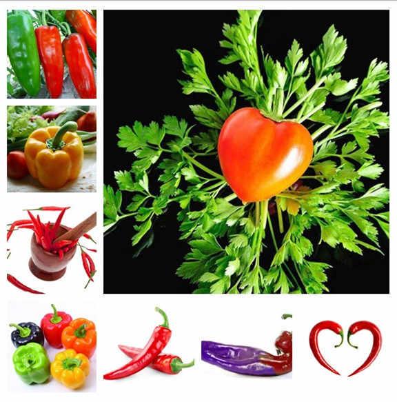 100 לערבב צהוב סגול אדום ירוק לבן מיקס מתוק פלפלים בונסאי ירקות צ 'ילי, בונסאי צמח משפחה גן בונסאי