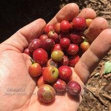 100Kona Coffee Bean  Balcony Bonsai Tree Plant Seed Coffee Cherry  for home garden