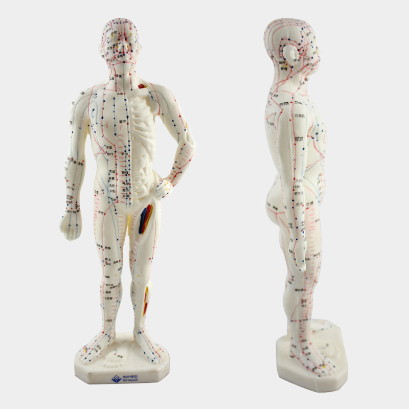 Medical Chinese Medicine Meridians Acupuncture Moxibustion Model Acupuncture Point Mannequin Acupuncture Model 26cm dog acupuncture model animal acupuncture model