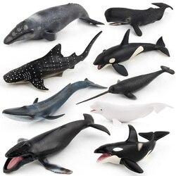 Simulação baleia animal figura collectible brinquedos oceano cognição animal figuras de ação crianças brinquedos de borracha macia sólida
