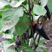 100pcs Hot Black Pepper Seeds