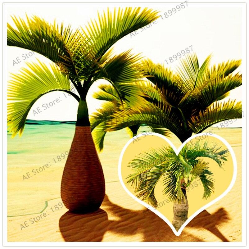 10Pcs/bag Bottle Palm flores Exotic Plants Tree Home Garden Balcony Bonsai Pots Beautiful Tropical Ornamental tree