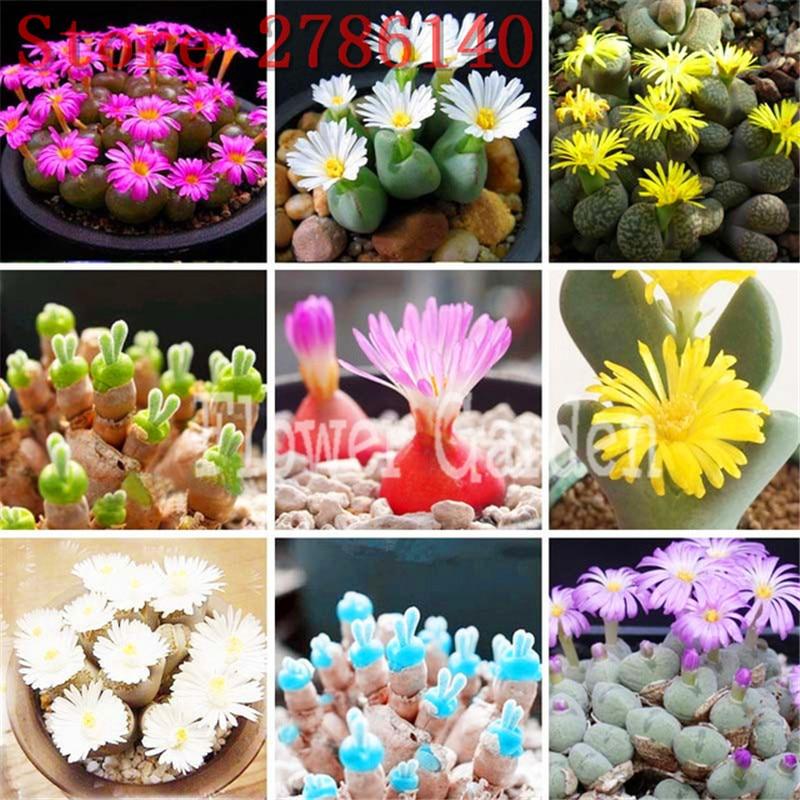200seedspack Mix Succulent seeds lotus Lithops Pseudotruncatella Bonsai plants Seeds for home & garden Flower pots planters