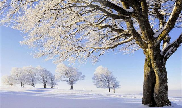 New Luxury 3d Wallpaper Walls Forest Snow Roll Modern Art Landscape Wallpapers For Living Room