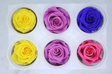 5boxslot upscale decorations diy preserved flowers 6pcsbox color mixing you can - Upscale Halloween Decorations
