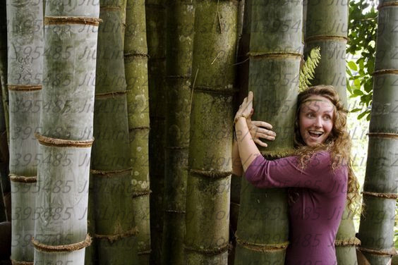 40pcs Bag Bamboo Seeds Rare Giant Black Moso Bambu Professional Pack Bambusa Lako