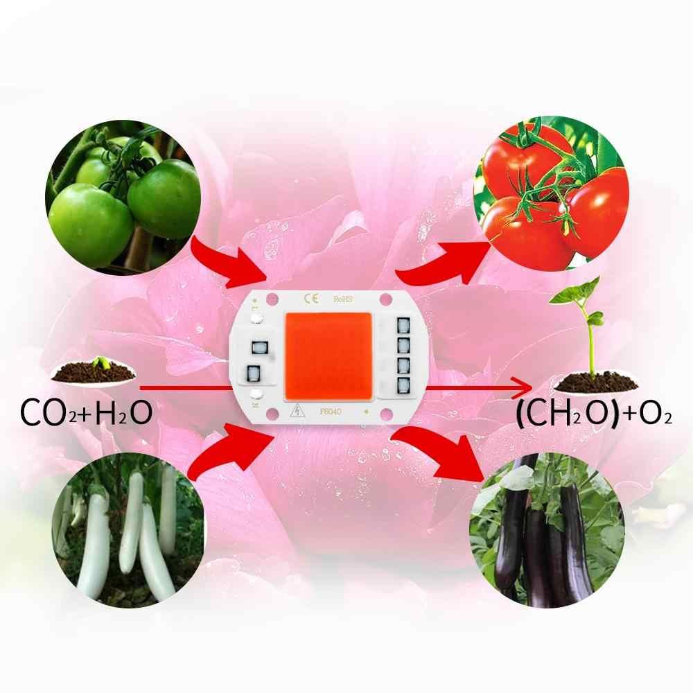 COB oświetlenie led do uprawy pełne spektrum Chip nie ma potrzeby kierowcy AC 220V 20W 30W 50W lampa ziołowa do świecąca roślina kryty sadzonka rosną lampy