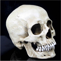 Free Shipping Human Skull Resin Replica Medical Model Lifesize 1 1 Halloween Home Decoration High Quality
