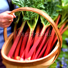 100 Pcs Leaf Beetroot Vegetable Seedss Sweet Easy-growing Heirloom DIY Home Bonsai Pot Balcony NON-GMO Vegetable for Salad