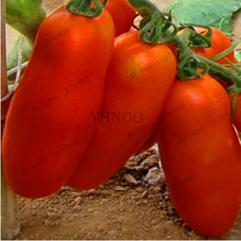Новое поступление! томат бонсай Kibits Украина негибридные овощи сад, 100 растительный/пакет, растет в теплице наземными чудо, #4T8KH0