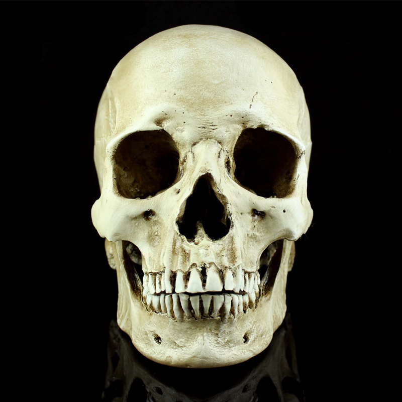 Horror life size human skull simulation 1 1 model of medicine horror life size human skull simulation 1 1 model of medicine skeleton gothic decoration halloween party scene layout present in party masks from home ccuart Images