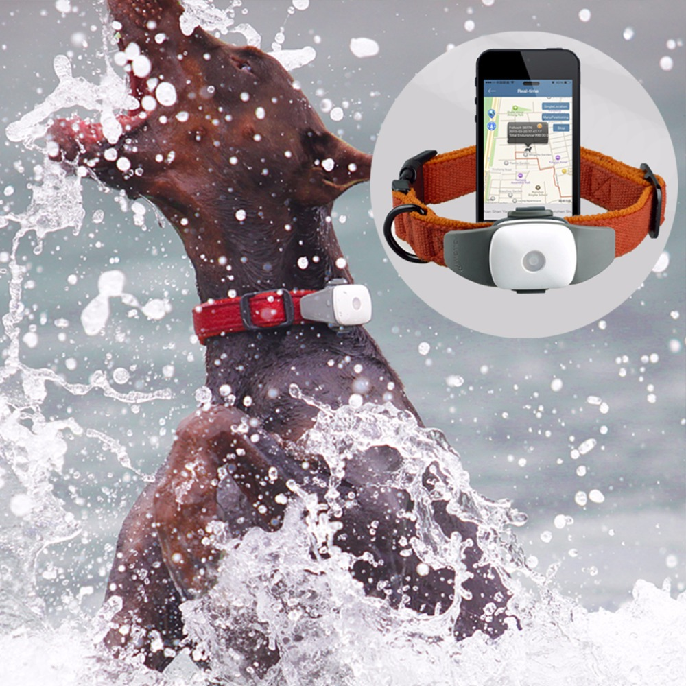 Pet GPS Tracker, Cat Locator Free APP, Pet GPS Collar, GPS Tracker High Quality Pet GPS Tracker